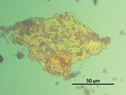 Figure 3. Ferrogram photomicrographs of the turbine oil particles in different samples (1,000x magnification)